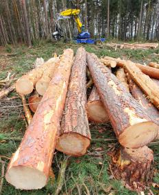 Clearcutting is the logging practice of cutting down all the trees in an area, despite the age or importance of the trees.