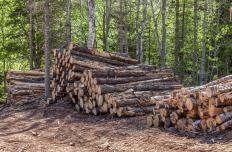 Most lignin used in manufacturing is extracted from timber.