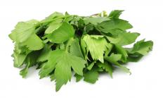 Lovage looks like parsley and may be used in salads.