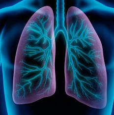 The inhalation of asbestos impacts the lungs and can lead to cancer.