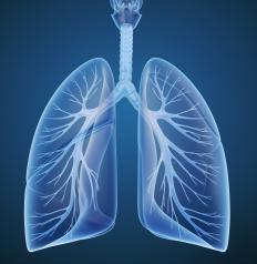 Bronchopulmonary segments deliver oxygen to the smallest part of the lungs.
