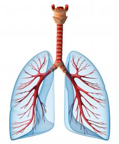 The breathing mechanism involves using the respiratory muscles to bring air in and out of the lungs.