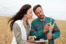 Agricultural scientists study crops to improve quality and safety.