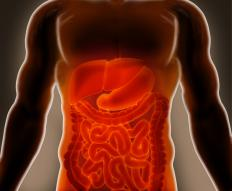 Bile is released into the small intestine by the biliary tract.