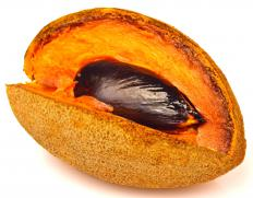 The fruit of the mamey sapote is sweet and similar in taste to sweet potato or pumpkin seasoned with chocolate and almond flavoring.