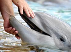 Dolphins are sometimes included in arguments for the Aquatic Ape Hypothesis.