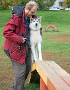 Dog training relies on the animal's abilities to learn and memorize.