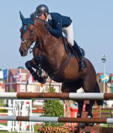 Thoroughbred horses may be featured in show jumping.