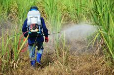 Arsenic may be found in some herbicides and insecticides.