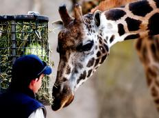 Zoos may set up webcams so guests can check in on their favorite animals from home.