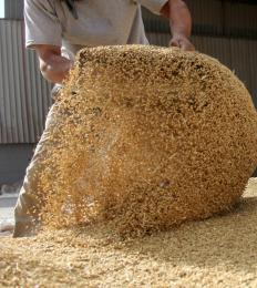 Contaminated cattle feed is thought to have led to mad cow disease.