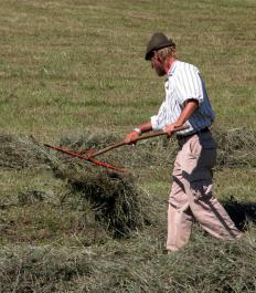 A dethatching rake should be used to break up and remove debris from the lawn before aeration.