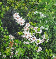 Manuka honey, which is secreted by bees that feed on the manuka bush, may help ward off infection in patients undergoing radiation therapy.
