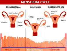 A short menstrual period is bleeding of less than two days or a cycle of less than 21.