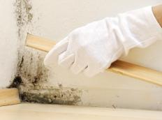 Mildew occurs in areas that are moist and should be removed immediately.