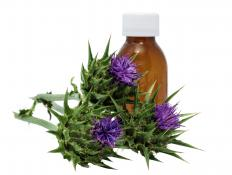 Milk thistle is used to treat liver diseases in dogs.