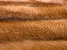 Fur coats may be made from minks.
