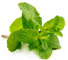 Mint may be used to garnish custard.