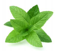 A thin paste made of mint leaves may be used as an herbal treatment for dark circles.