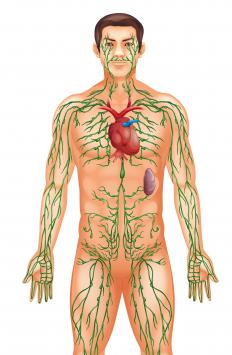 The lymphatic system being out of balance may be a contributor to sicca syndrome.