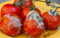 Calcium propionate can be used to prevent mold from developing on food.