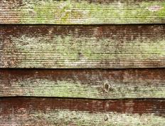 Wooden siding that has not been weatherproofed may be prone to developing mold.