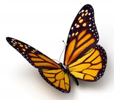 Many animals mimic the monarch butterfly.