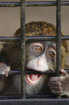 A reliable vaccine has been created for Ebola in monkeys.