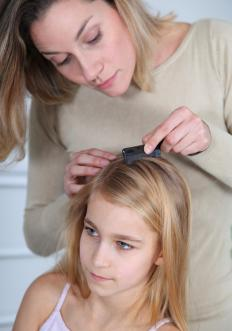 Lice are a type of body parasite that are found living in human hair.