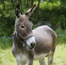 Kalaupapa National Park offers mule tours.