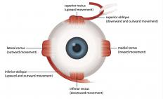 When the upper eyelid is unable to follow the rotation of the eye, it is referred to as lid lag.