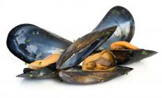 Mussels, a type of mollusk.