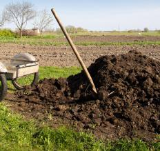 Animal manure should compost for a year before being applied to gardens.