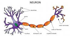 The axon is a cable-like structure that sends signals from one side of a neuron to the other.