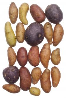 Various types of potatoes.