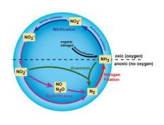 The nitrogen cycle, including the steps that make up nitrification, is a crucial process that takes place within soil.