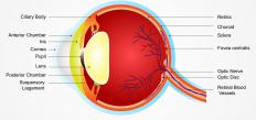 The iris is the colored portion of the eye that opens and closes to control the amount of light hitting the retina.