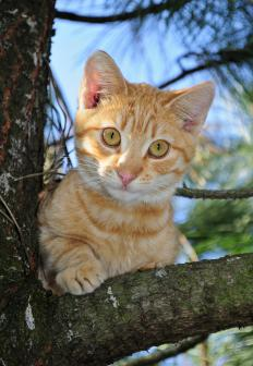 A cat may climb a tree to get a better view of her surroundings.
