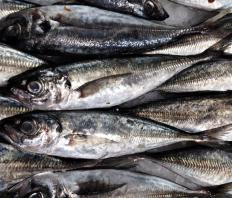 Sardines are a good animal source of DHA.
