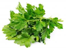 Parsley is used in abundance when making Lebanese tabouli.