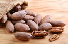 Pecans are harvested by picking up the pecans that fall to the ground.