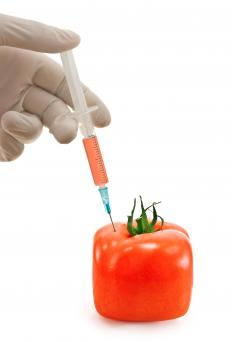 Some biotechnologists work to genetically modify fruits and vegetables.