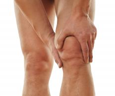 The tibial tubercle is on the front of the knee just below the kneecap.