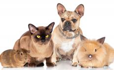 Pets are considered to be movable property.