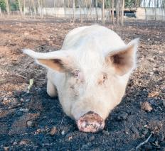 Animal activists have raised the ethical issue of whether animals deserve the rights that people enjoy.