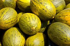 Santa Claus melons, or Christmas melons, are famous for their long shelf life.