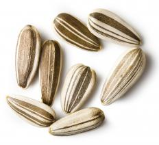 Roasted sunflower seeds are a popular snack.