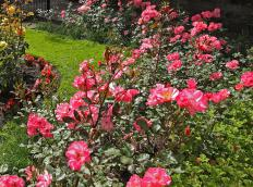 Garden tourism focuses on flowers and features that stand out.
