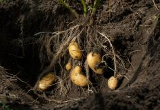 Soil science can improve crops.