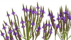 Natural muscle relaxers like vervain are one alternative to prescription products.